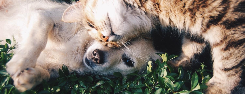 Dog og cat.jpg