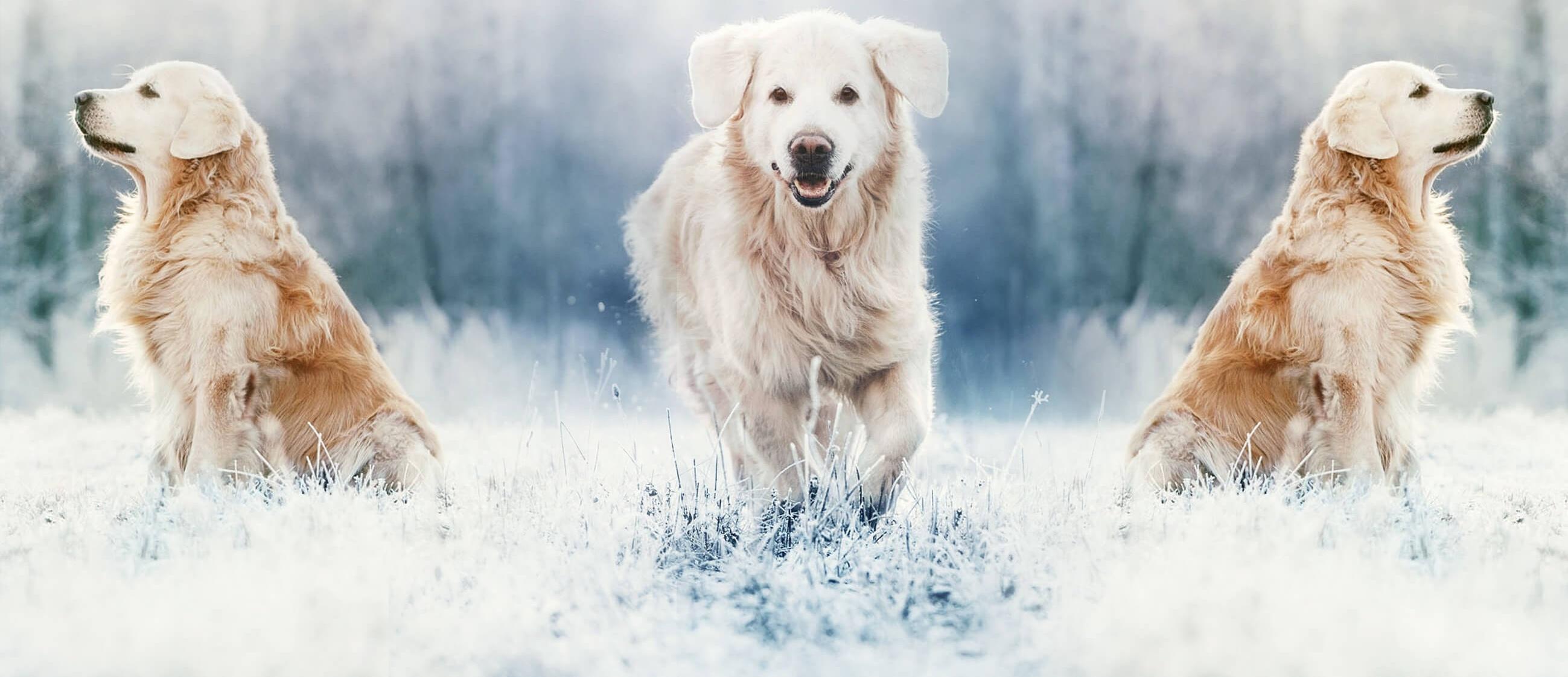 HomePagePic-dogs-bs-tp-490731-edited.jpg