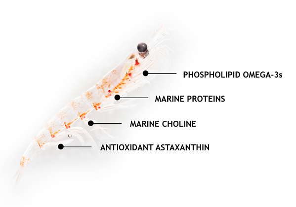 Krill with explanation