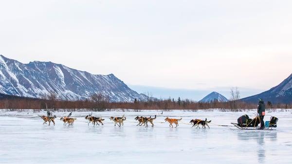 Rohn Iditarod 2019 - Joar Ulsom