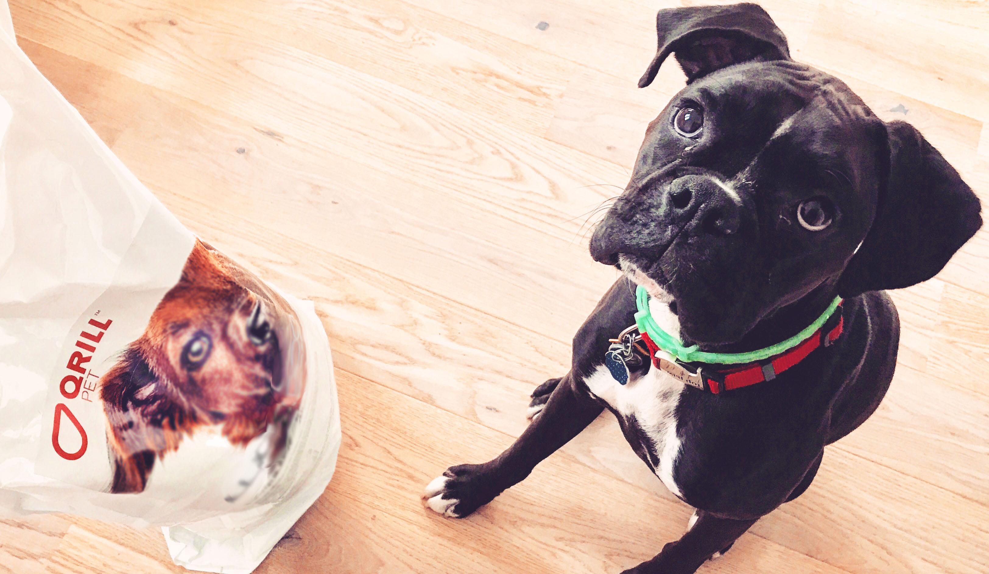 Krill Omega-3 Loving Dog.jpg