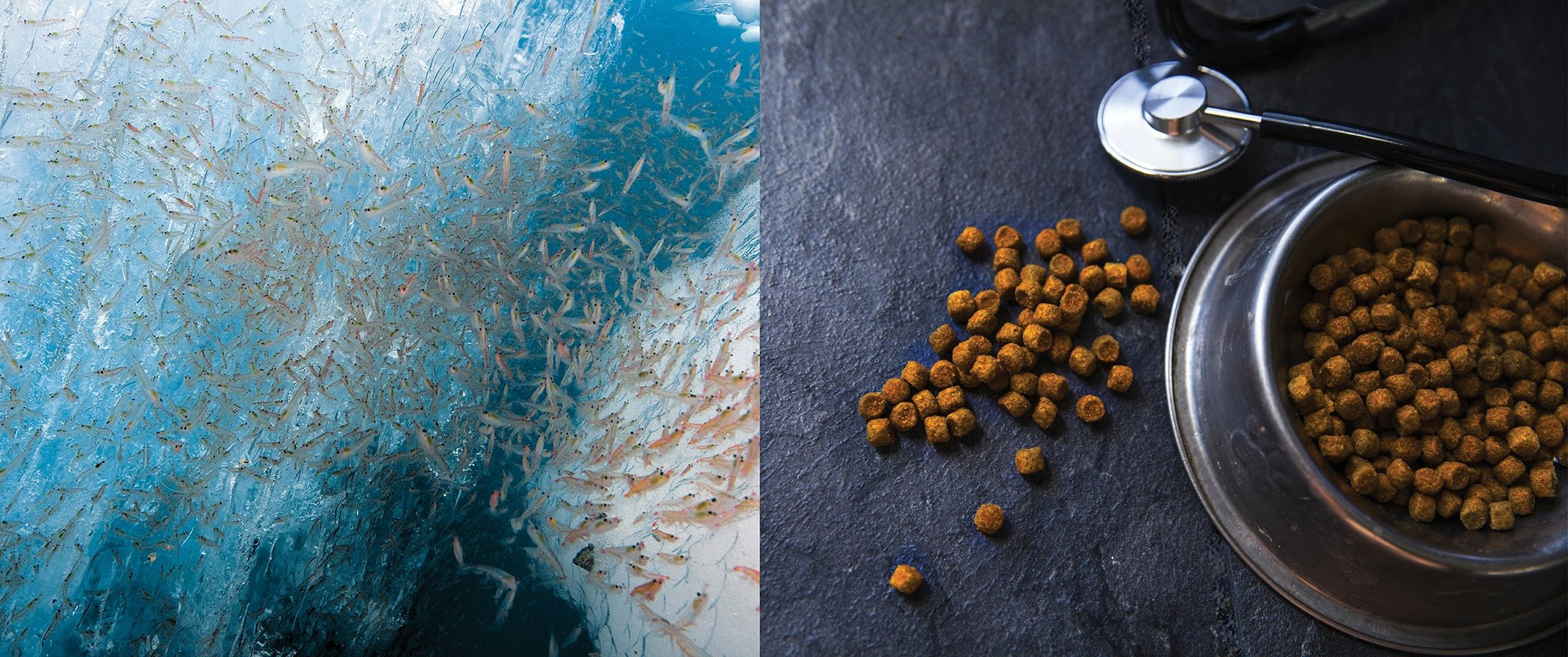 Krill for pet food.jpg