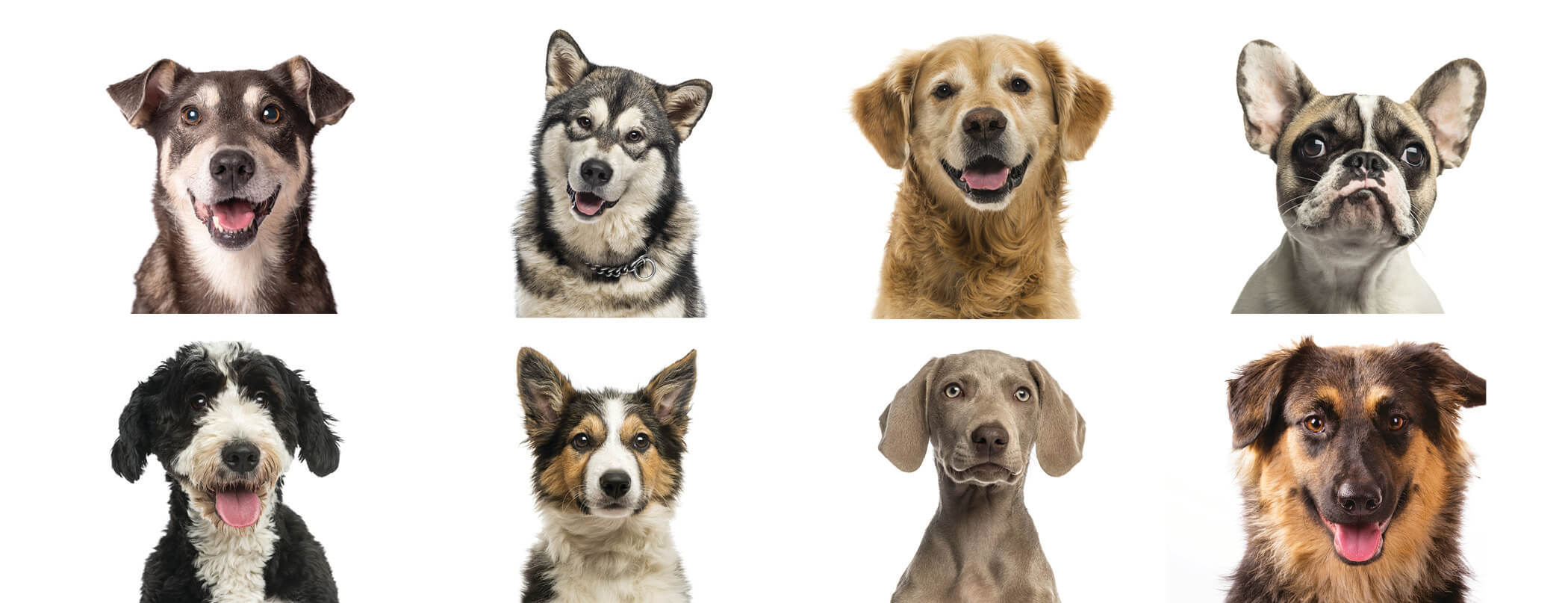 National Dog Day QRILL PET.jpg