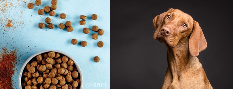 Omega-3-is-a-trending-pet-food-ingredient.jpg