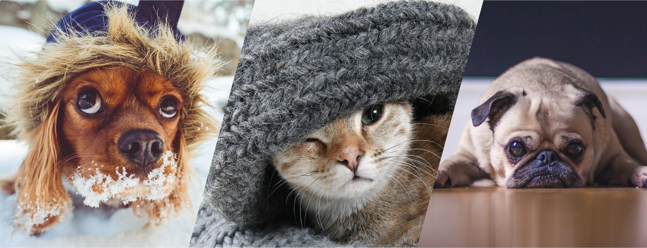 QRILL Pet Blog Post Trends-1.jpg