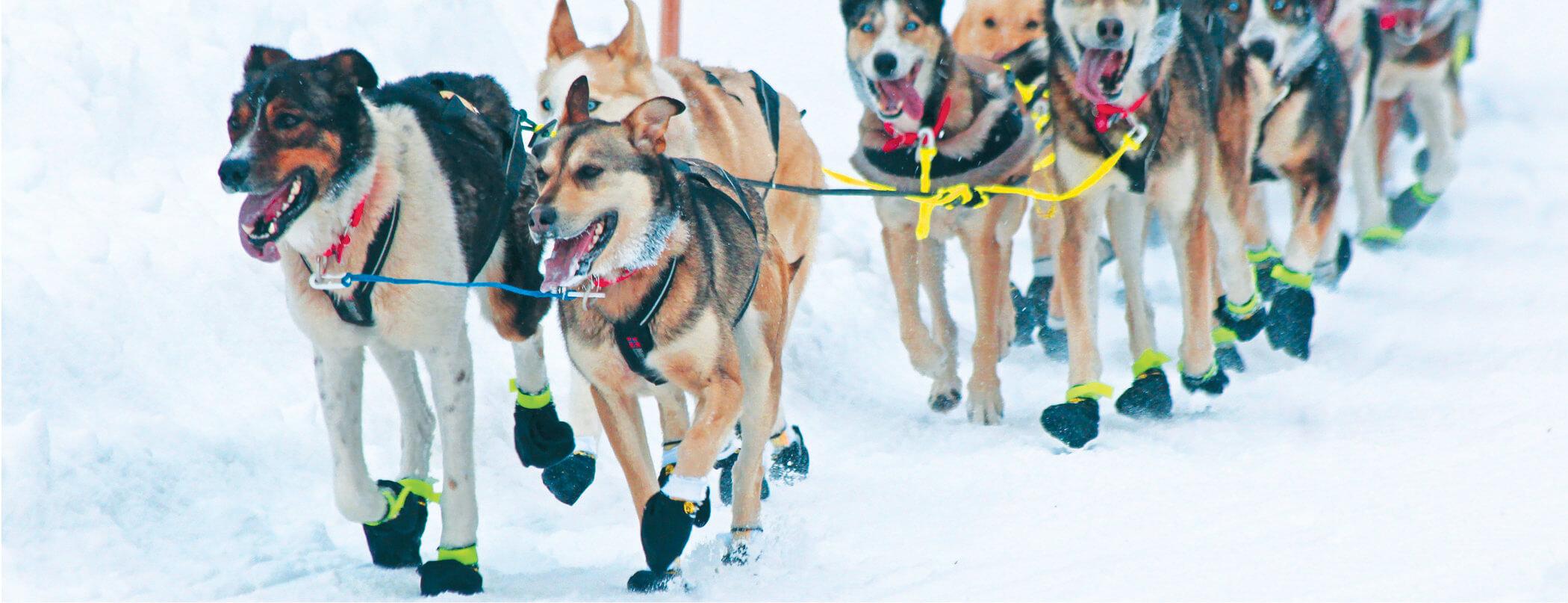 QRILL Pet Iditarod Champions.jpg