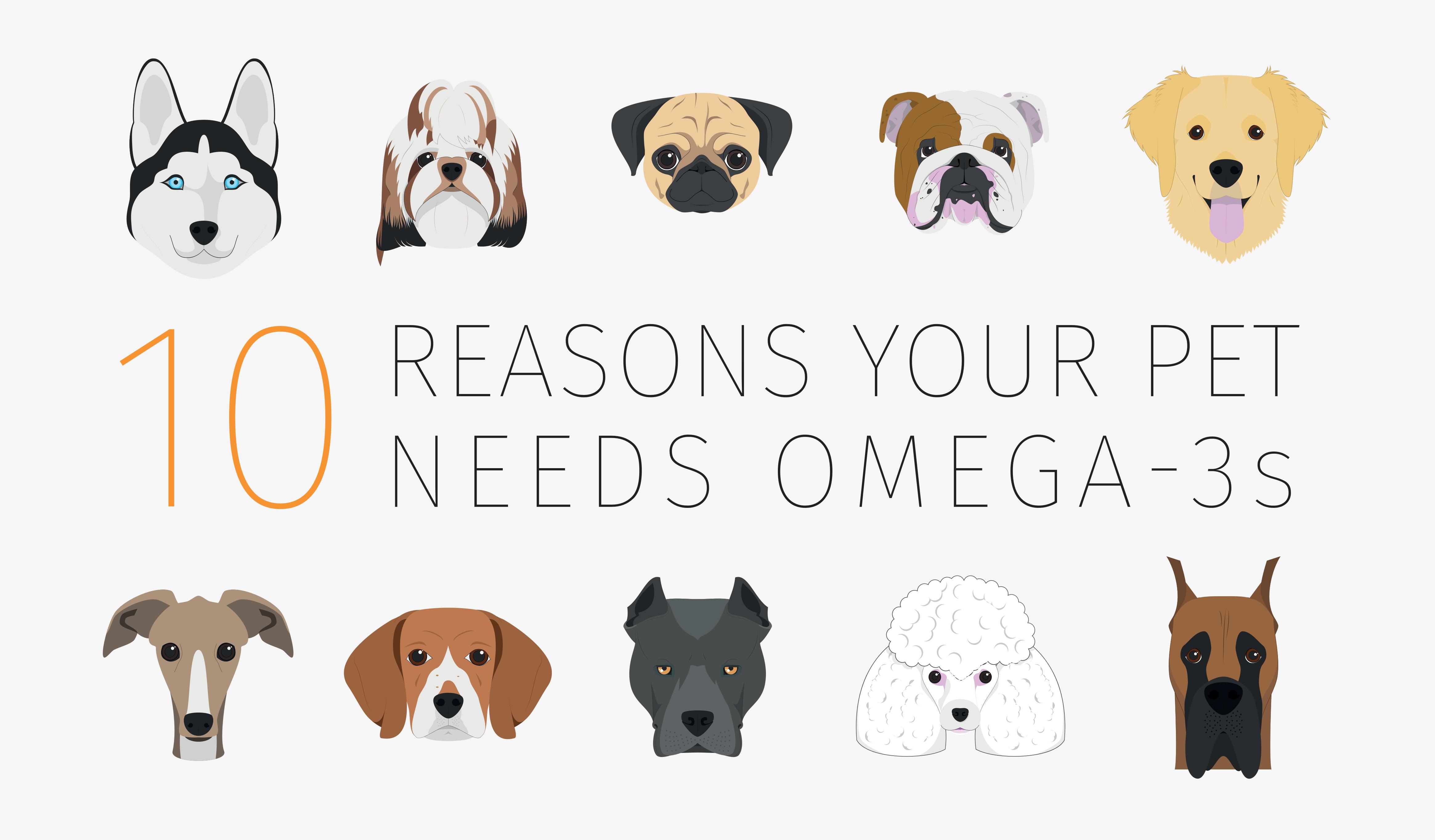 10-reasons-why-pets-need-omega3.png