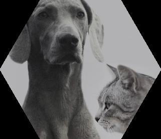 healthy pets.jpg
