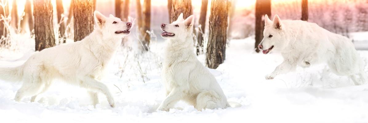 dogs snow2 (2).jpg