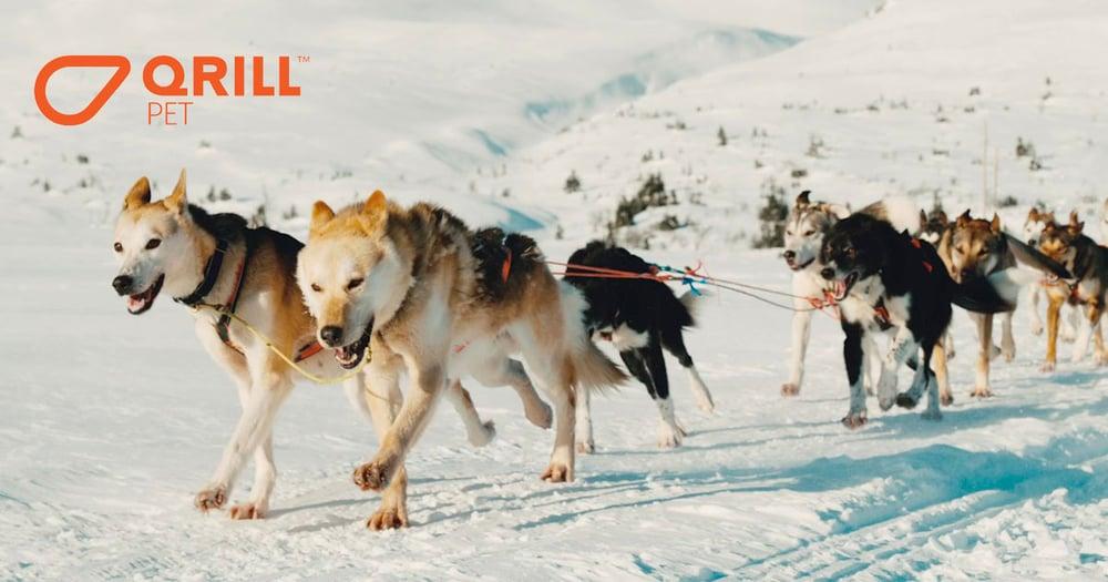 AstaOmegaStudy-Huskies