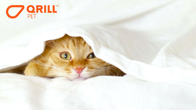 KrillConnect-Webinar-Image