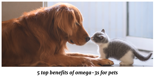 QRILL Pet_Blog Pictures_ 5 top benefits of omega-3s for pets