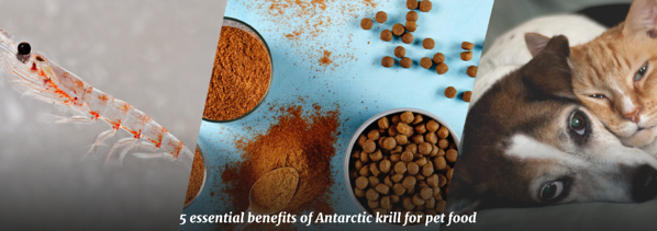 QRILL Pet_Pictures_Blog_5 essential benefits of Antarctic krill for pet food
