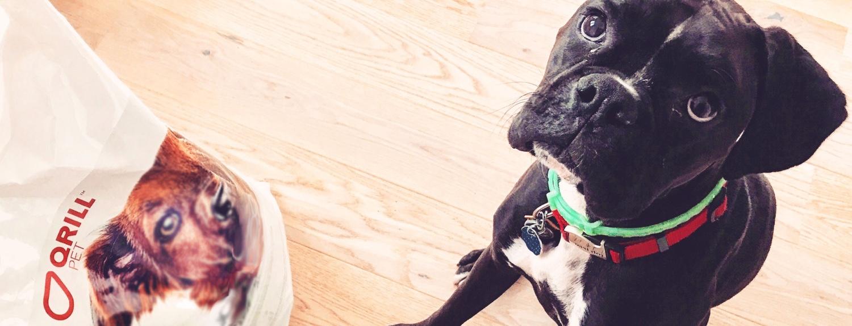 Dog-loves-qrill-pet.jpg
