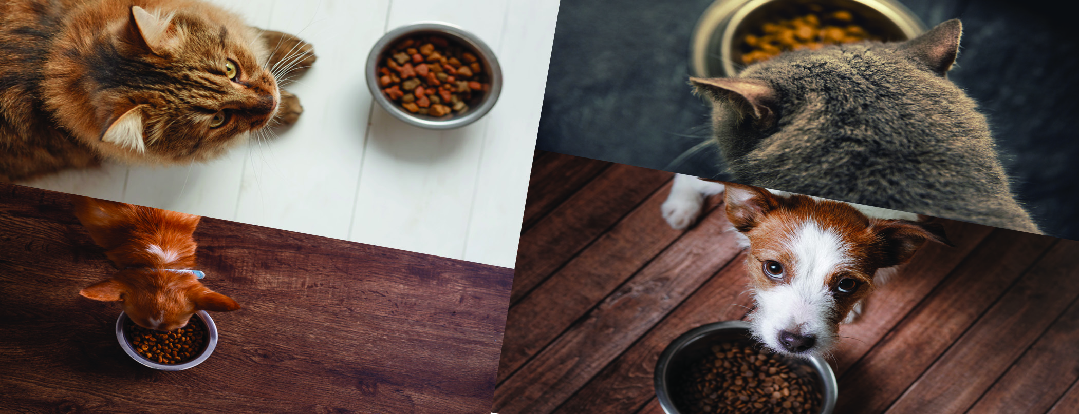 Pet Nutrition and Functional ingredients for pet food.jpg