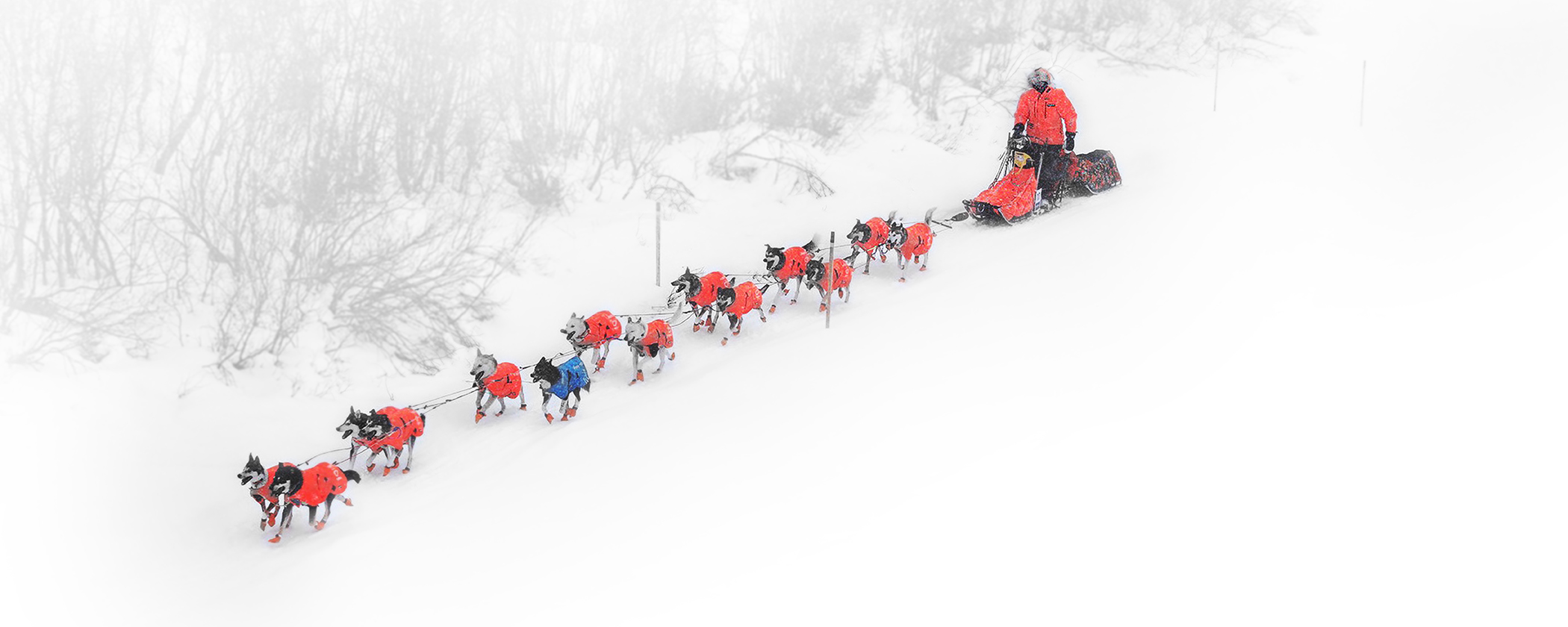 QRILL Pet Mushing Team Website