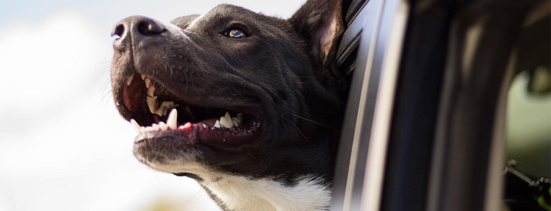 car-dog-product-bg