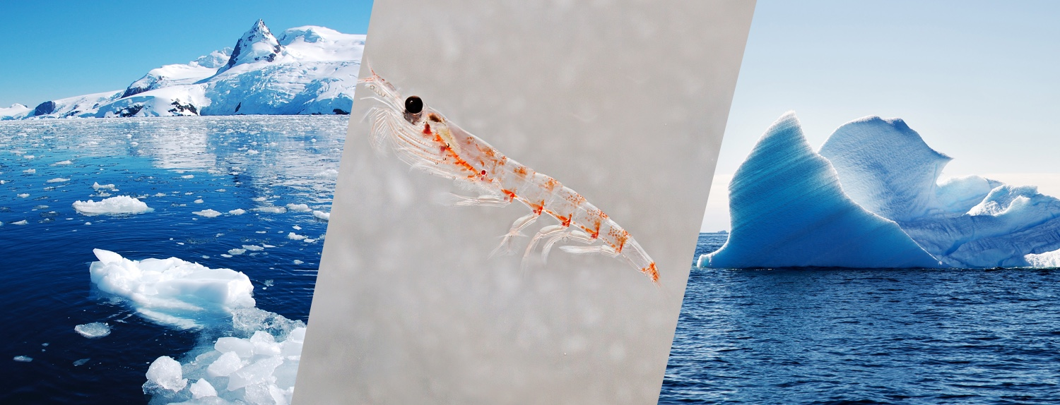 Sustainable krill fishery